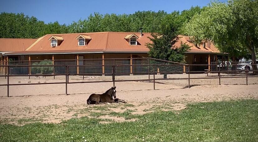 Lemitar Ranch & Farm Property Photo 109