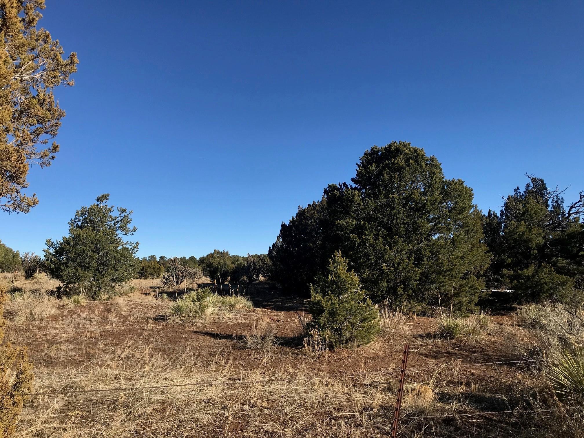 781 New Mexico 217 Property Photo