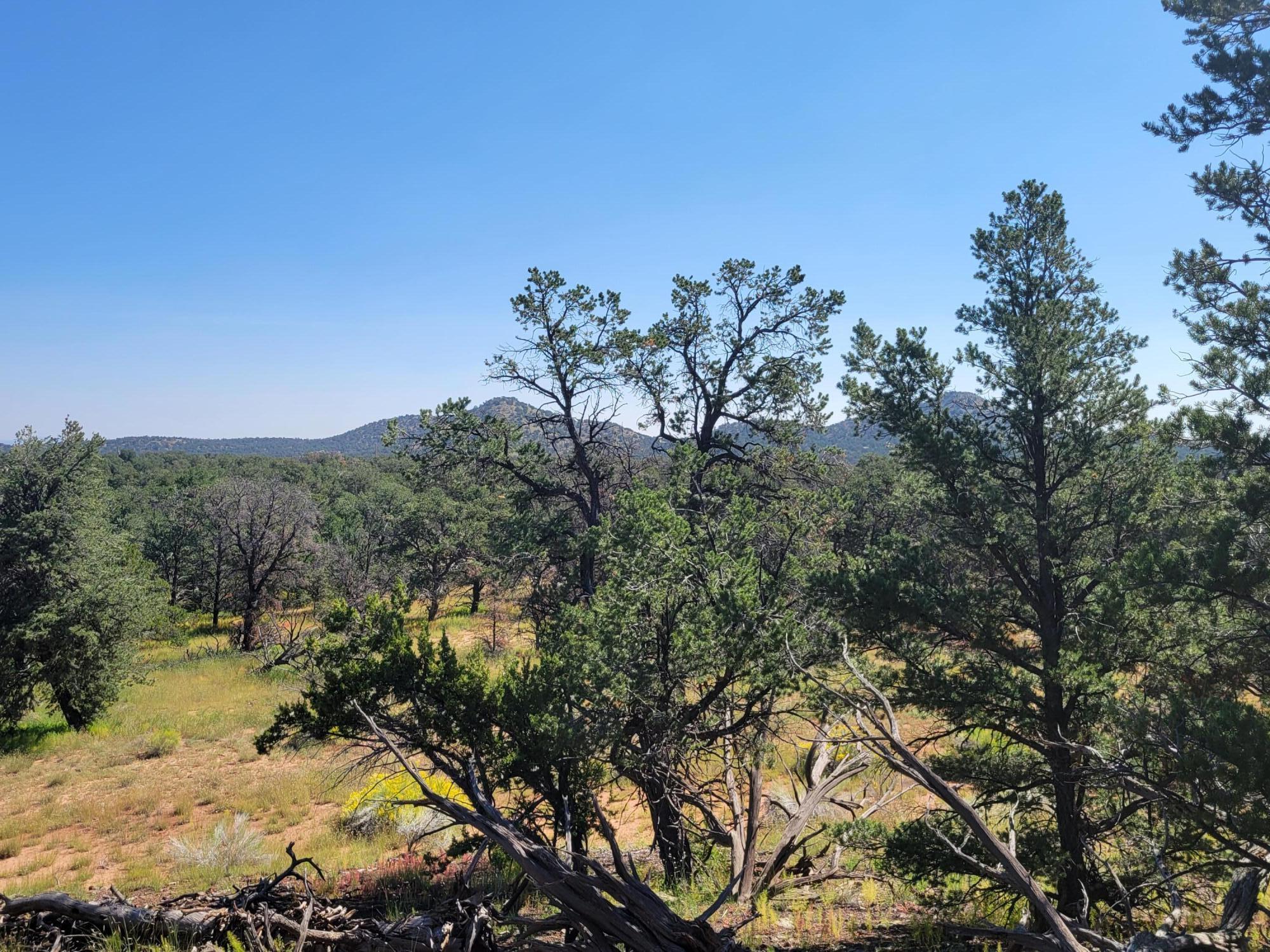 39 Elk Trail Property Photo