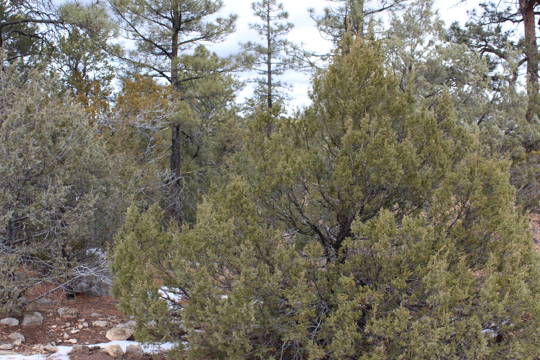 2 Manzano Springs Road Property Photo
