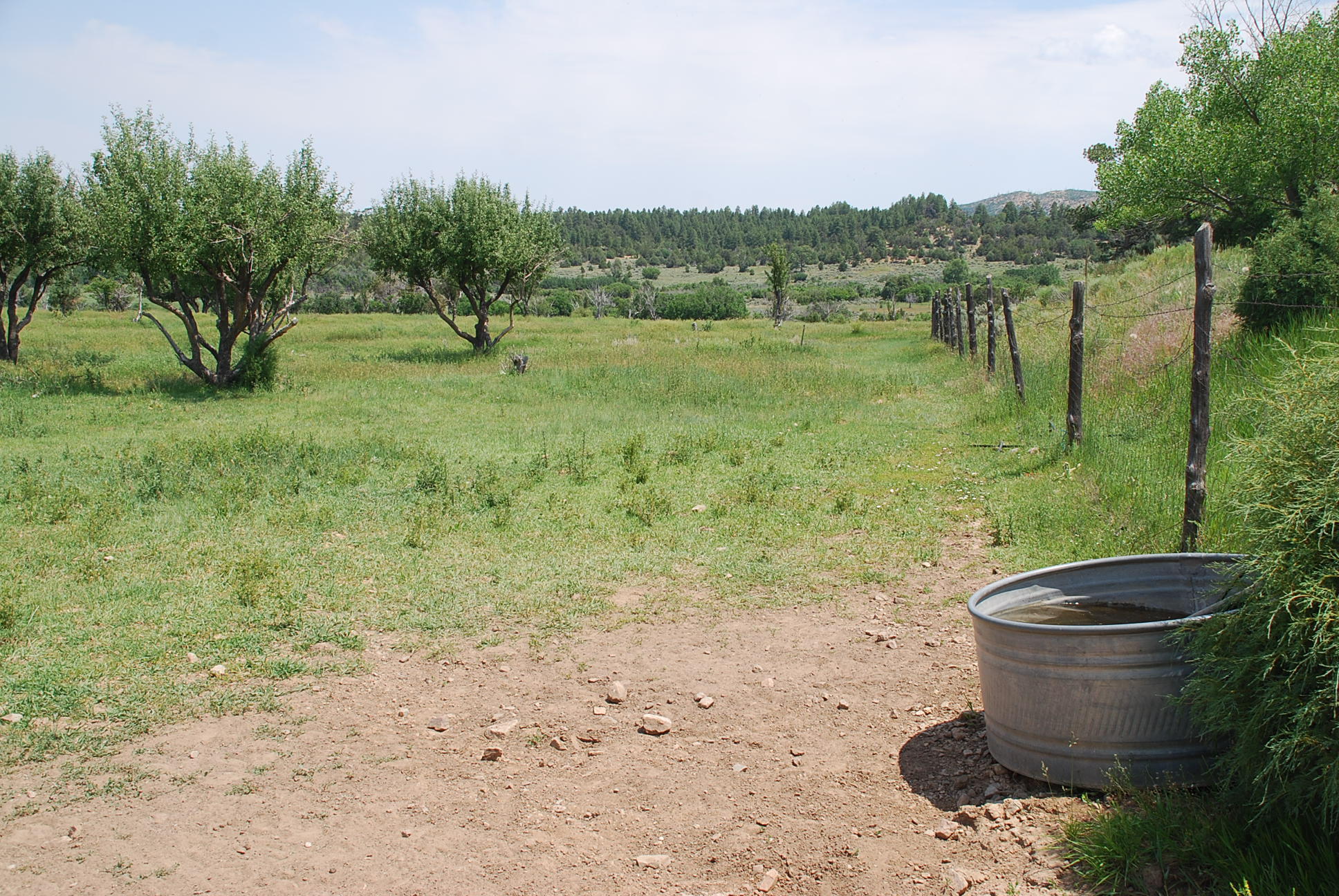 933 Bear Paw Rd., Bear Paw Ranch Property Photo 6