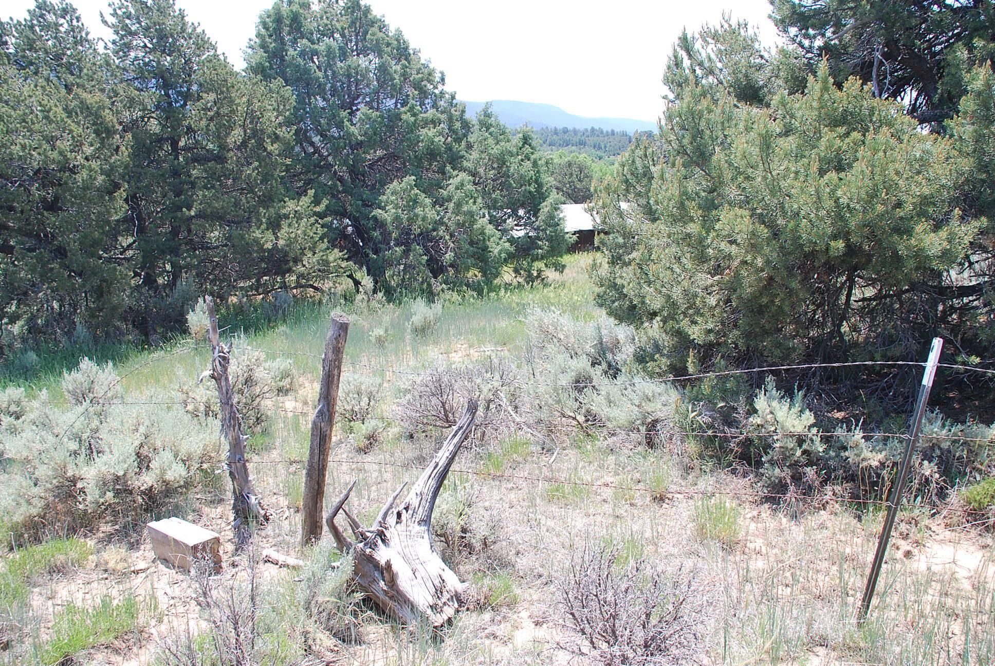 933 Bear Paw Rd., Bear Paw Ranch Property Photo 7
