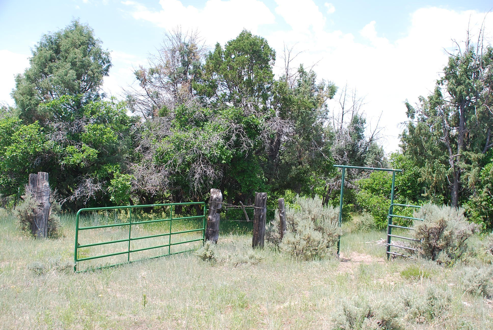 933 Bear Paw Rd., Bear Paw Ranch Property Photo 9