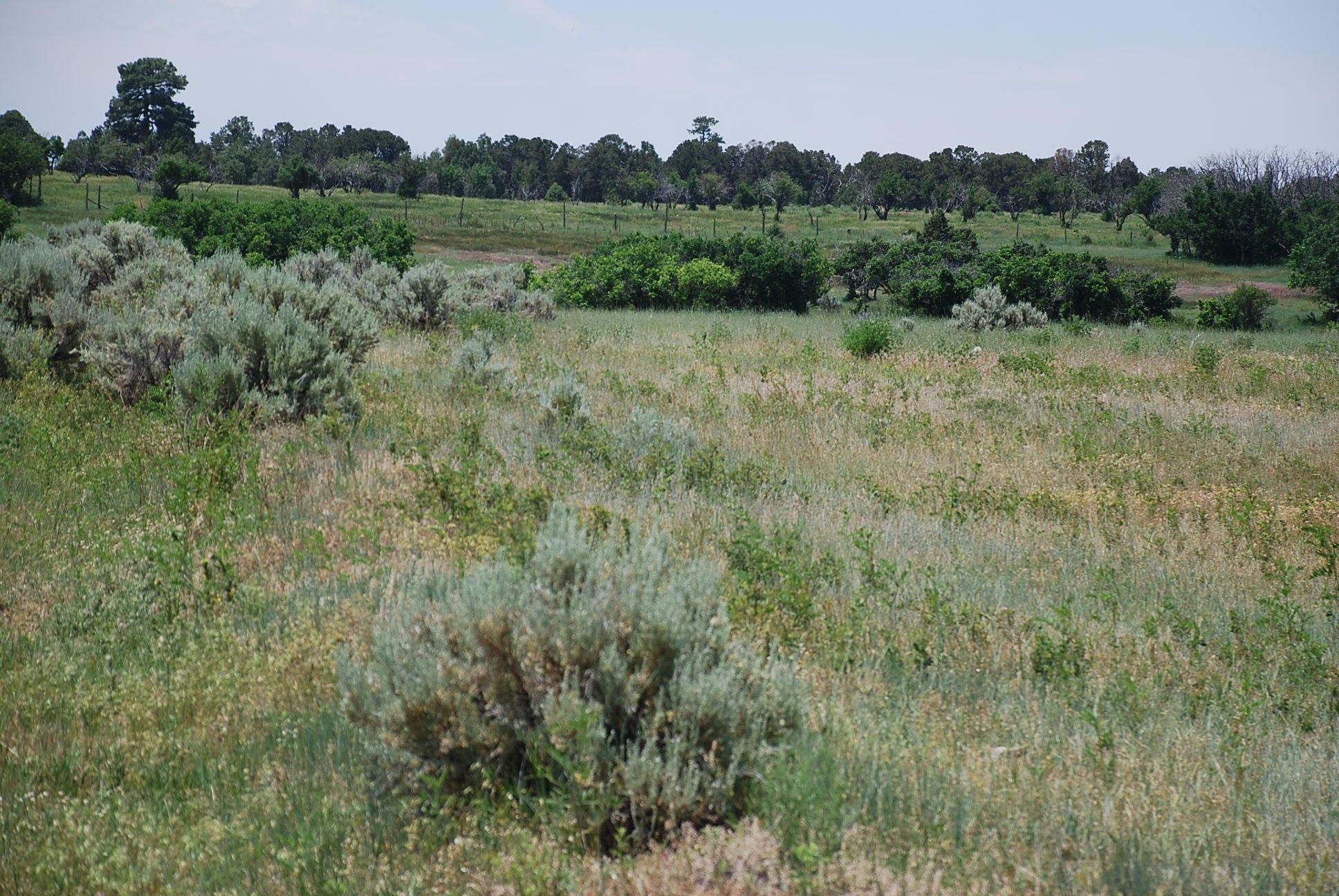 933 Bear Paw Rd., Bear Paw Ranch Property Photo 14