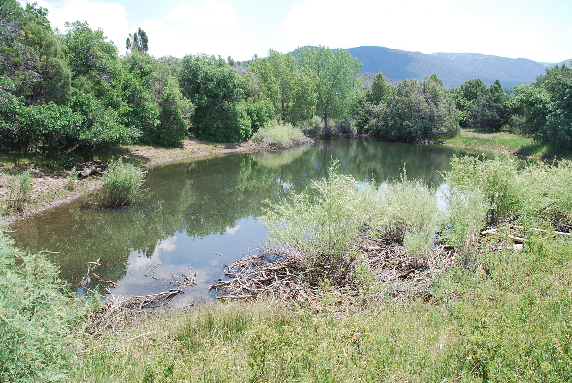 933 Bear Paw Rd., Bear Paw Ranch Property Photo 15