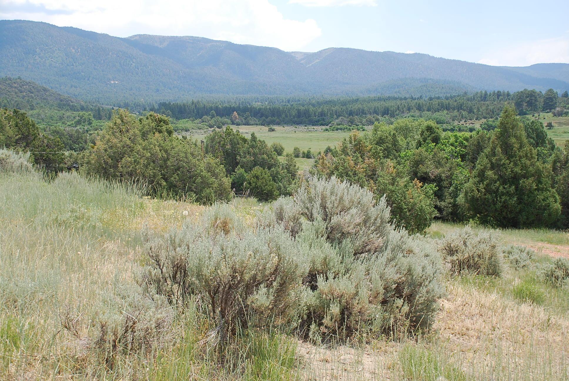 933 Bear Paw Rd., Bear Paw Ranch Property Photo 28