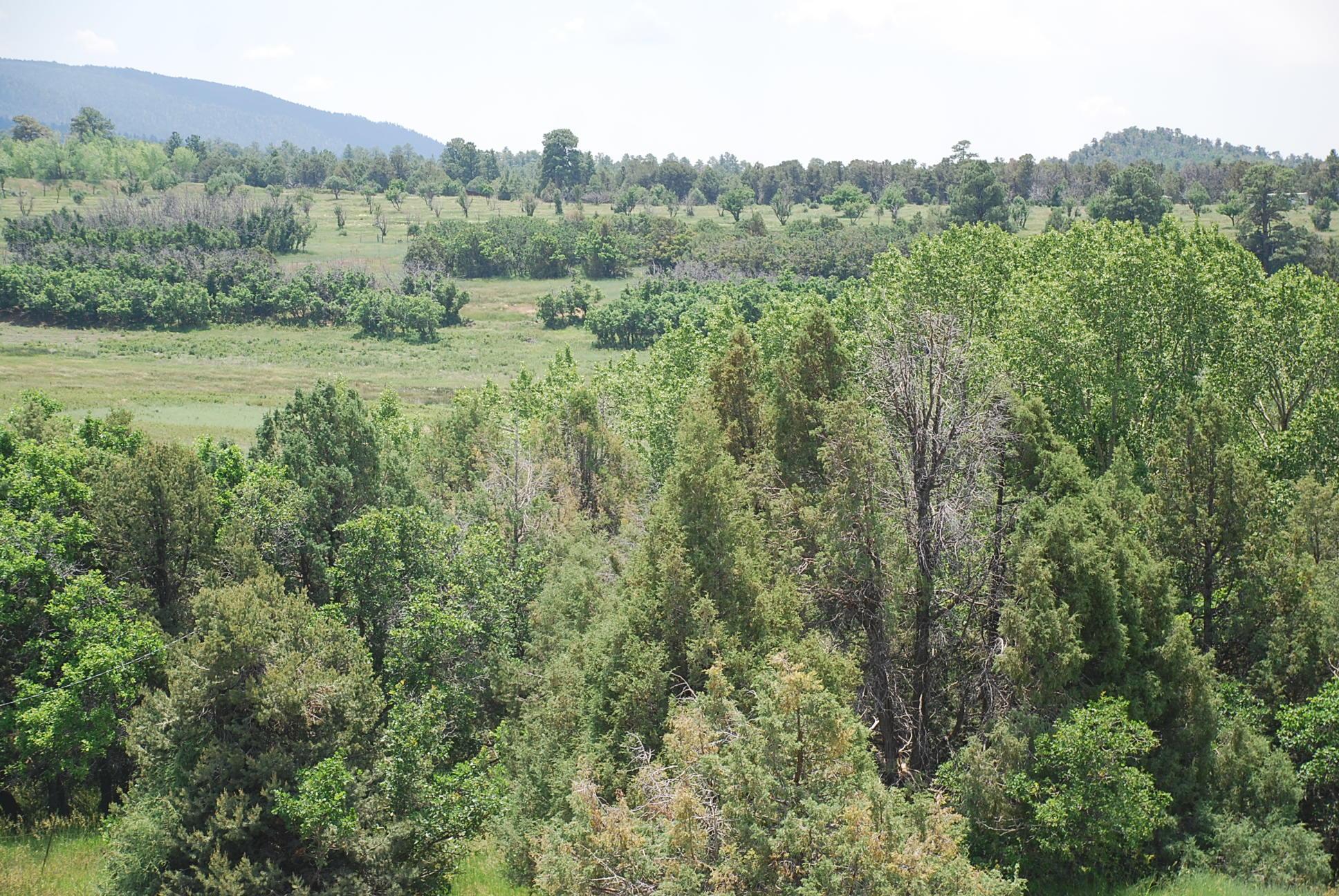933 Bear Paw Rd., Bear Paw Ranch Property Photo 37