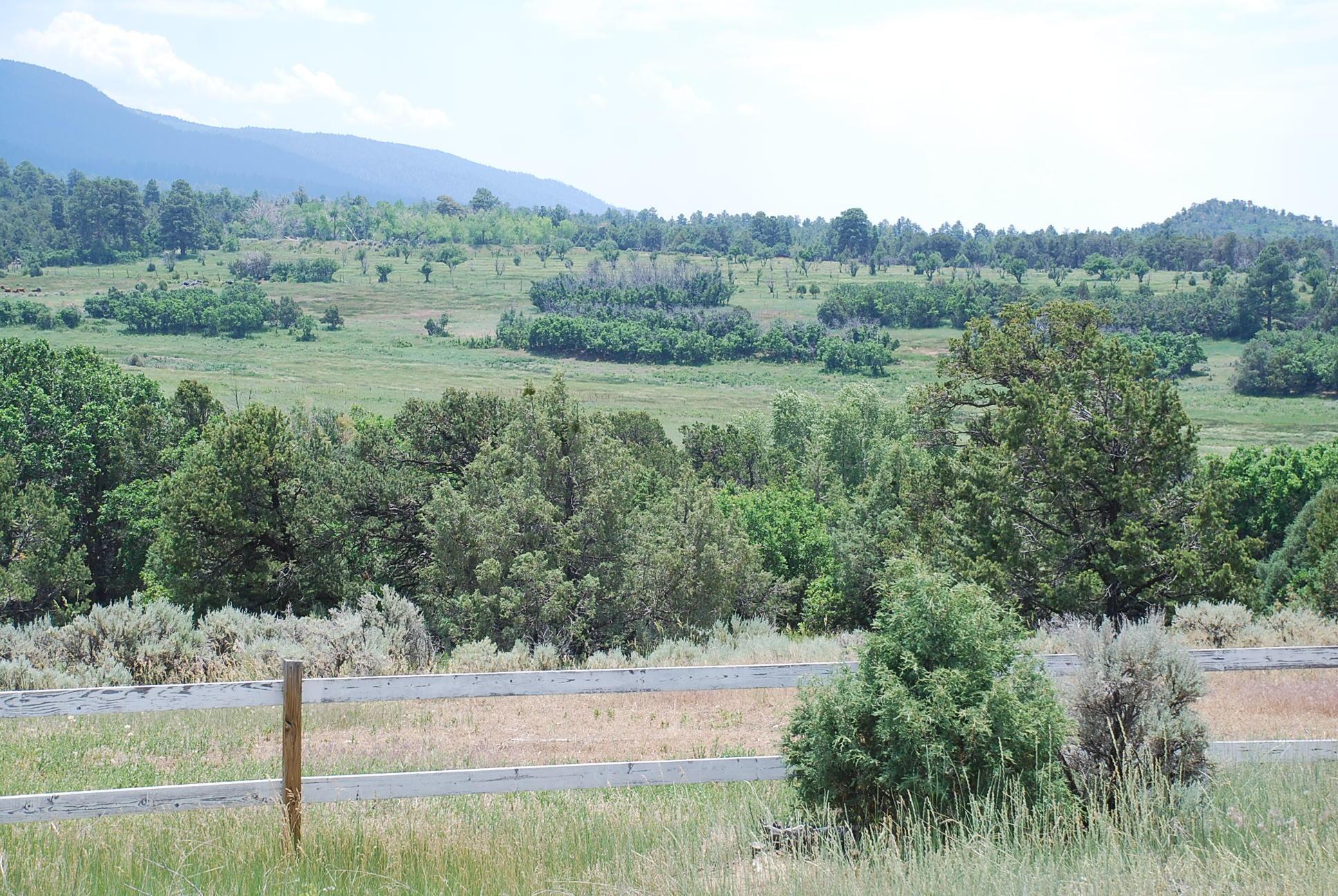 933 Bear Paw Rd., Bear Paw Ranch Property Photo 42