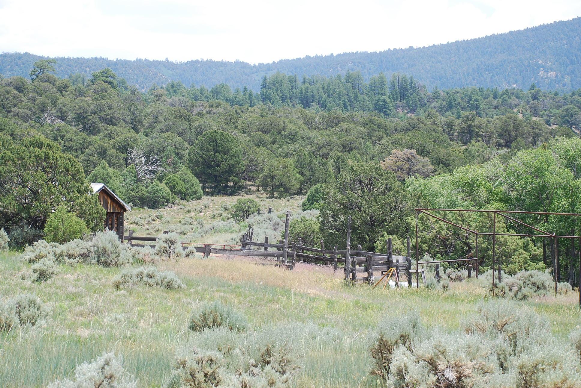 933 Bear Paw Rd., Bear Paw Ranch Property Photo 43