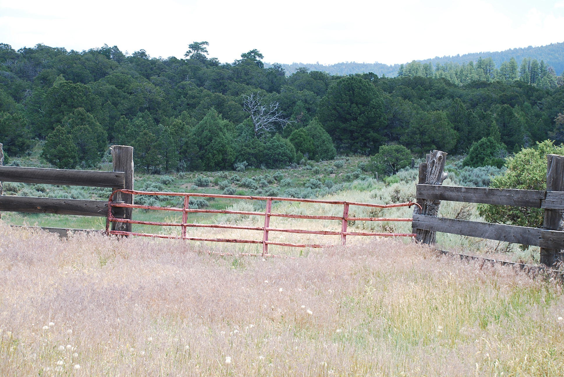 933 Bear Paw Rd., Bear Paw Ranch Property Photo 45