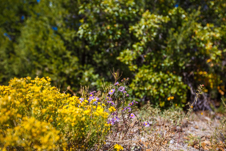 32 Granny Canyon Trail Property Photo