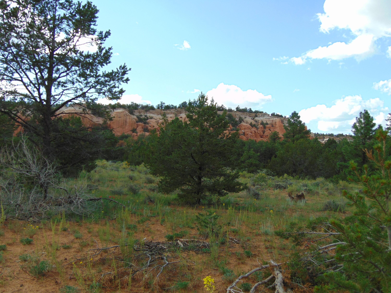 Galleta Ranch Property Photo 2