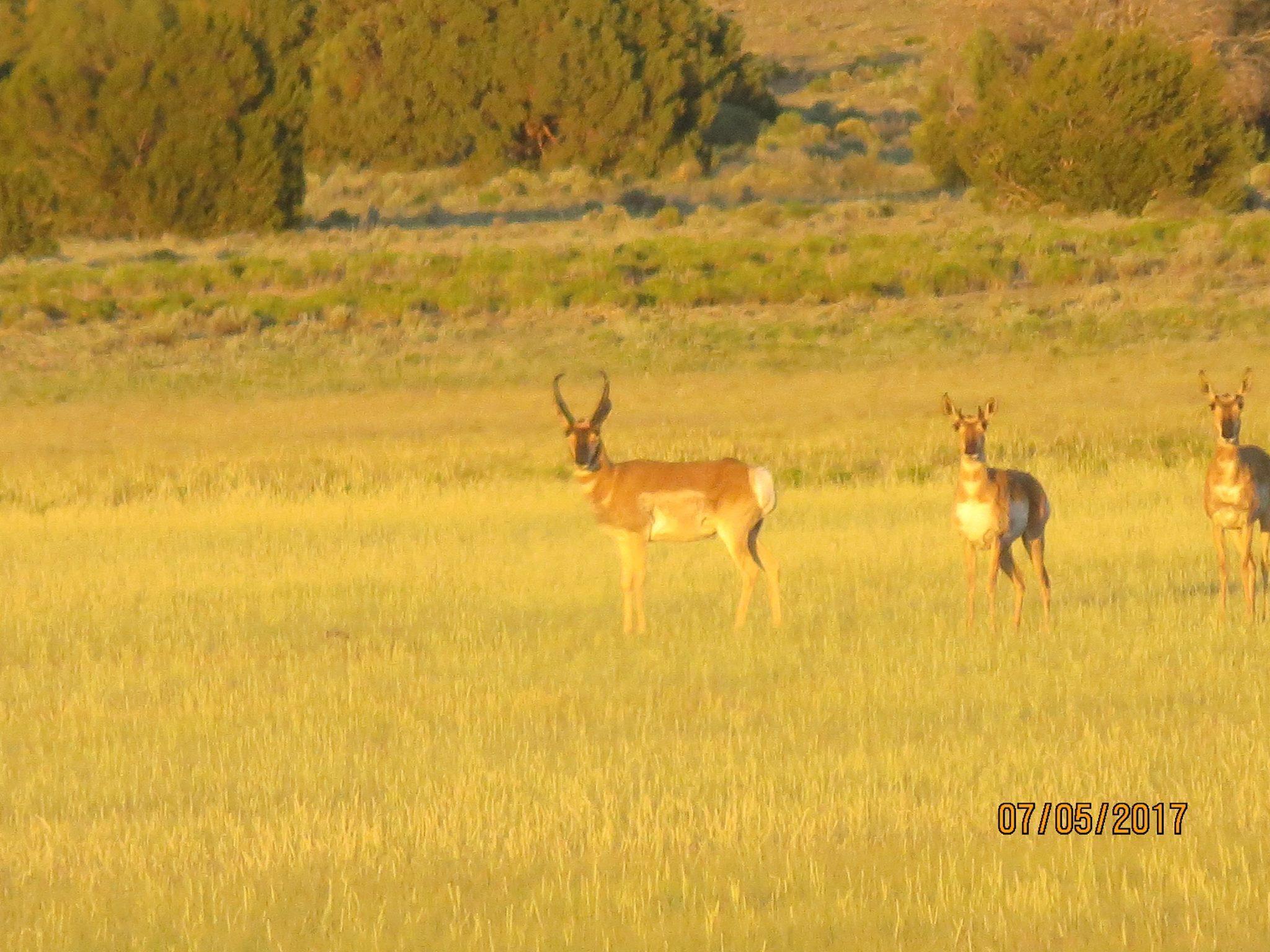Galleta Ranch Property Photo 16