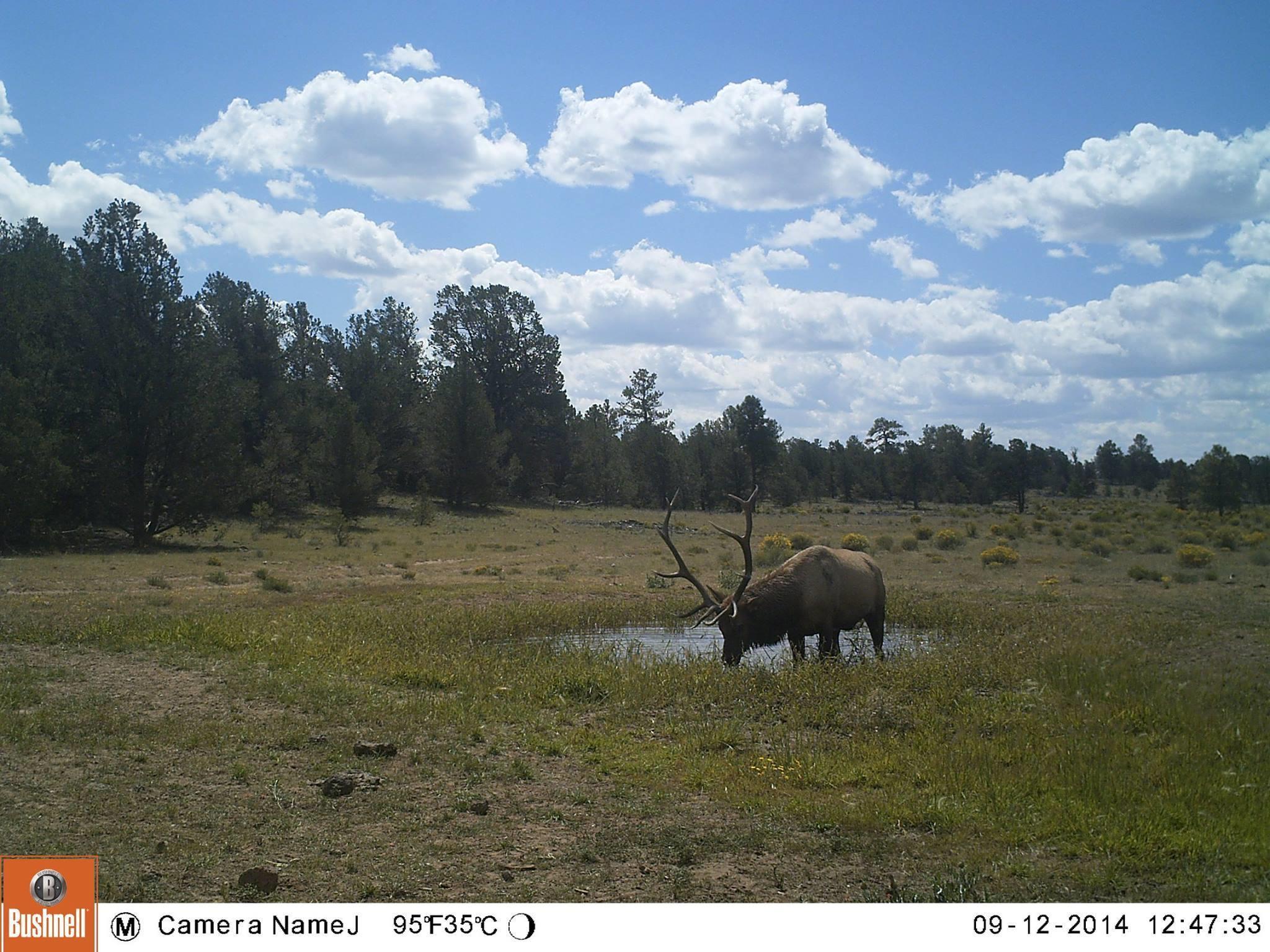Galleta Ranch Property Photo 17