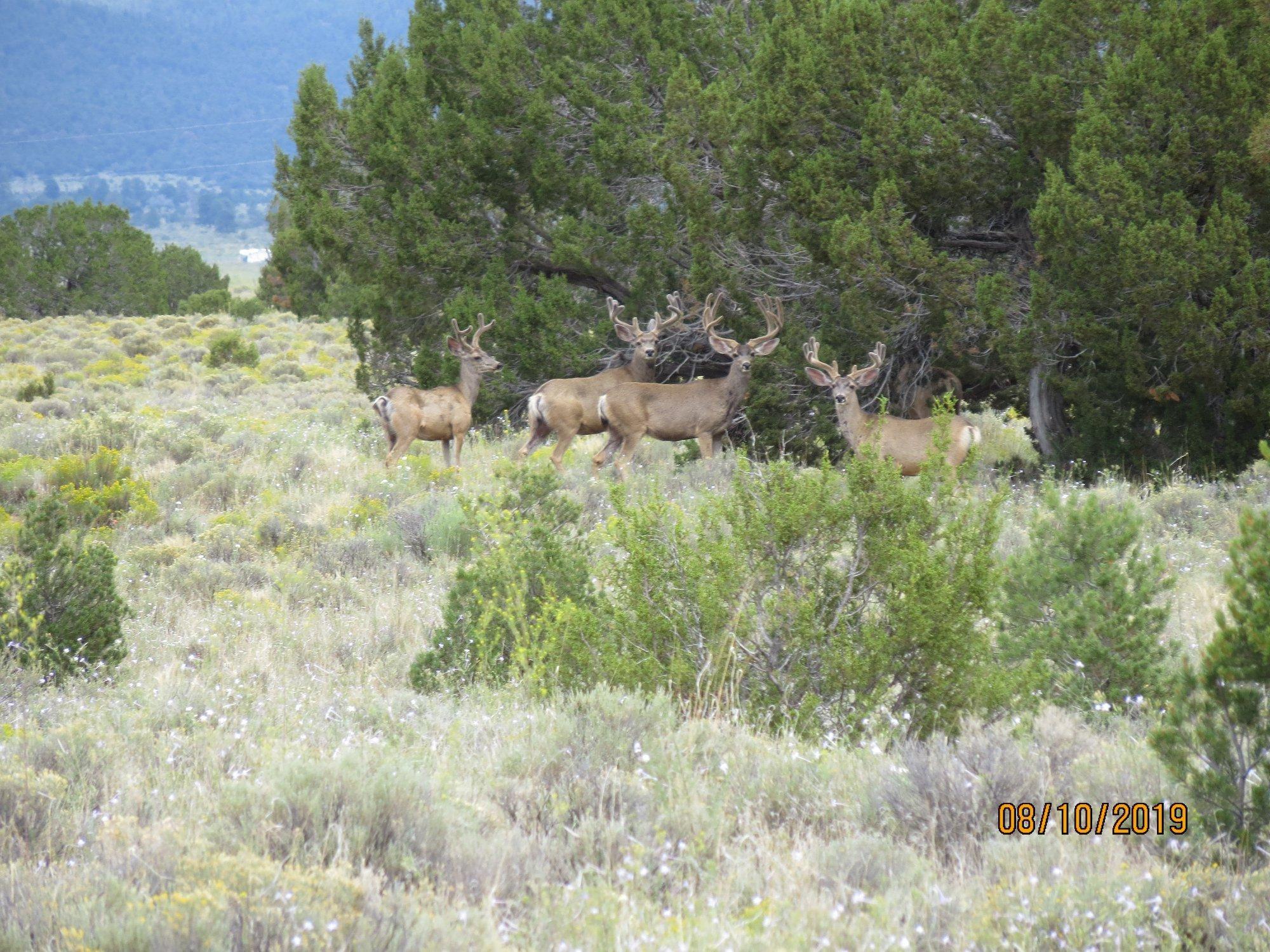 Galleta Ranch Property Photo 21