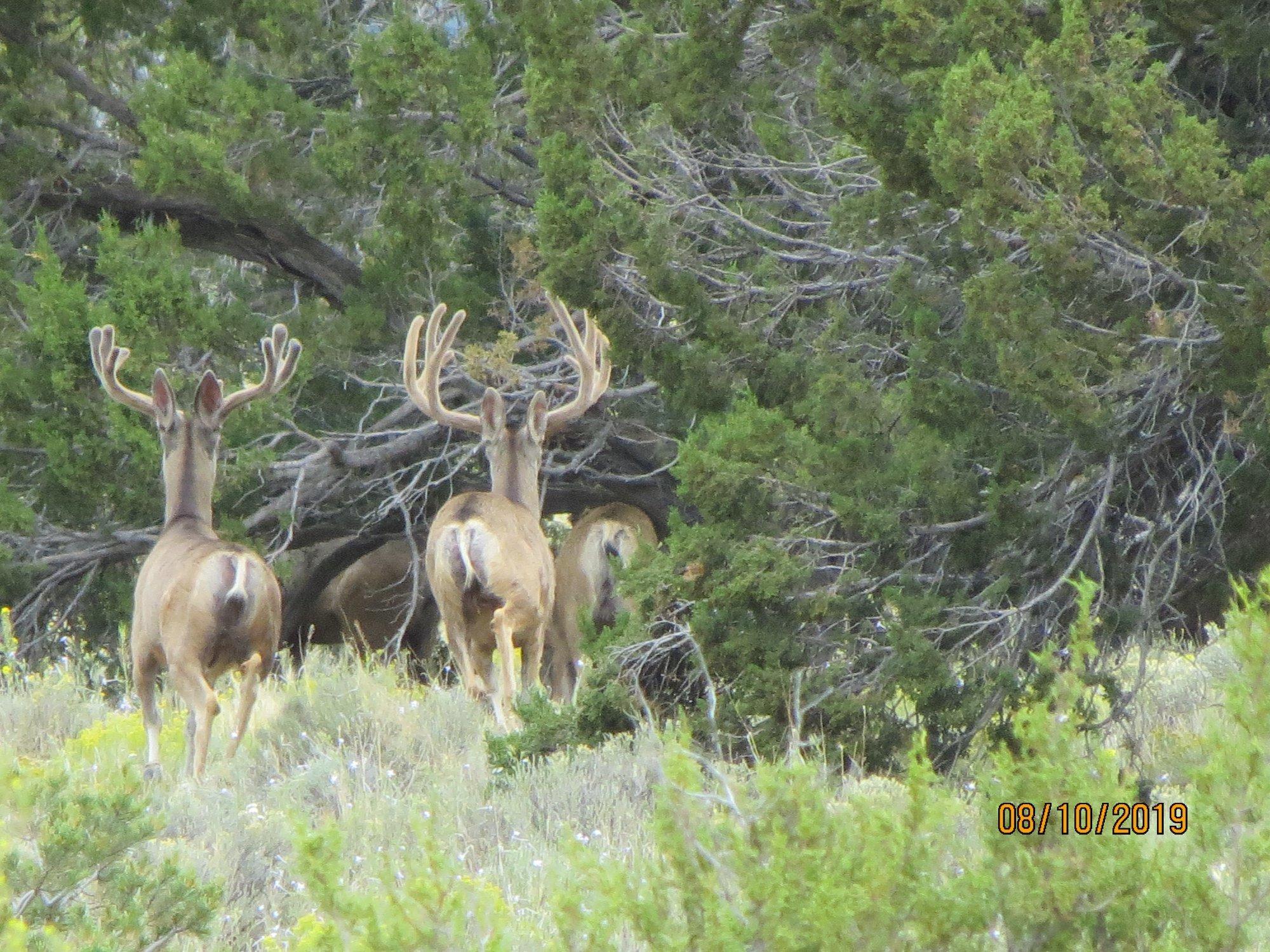 Galleta Ranch Property Photo 22