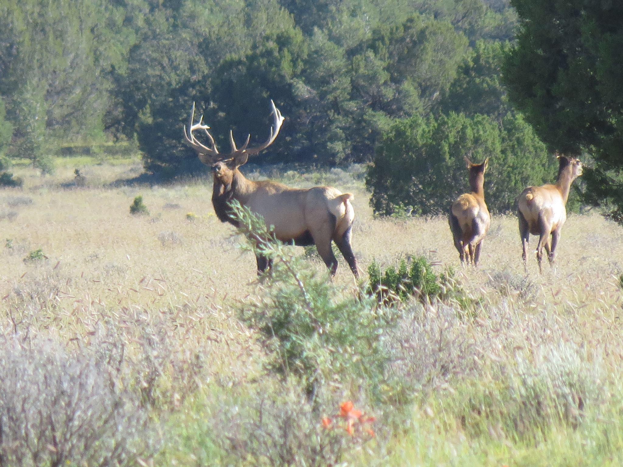 Galleta Ranch Property Photo 24