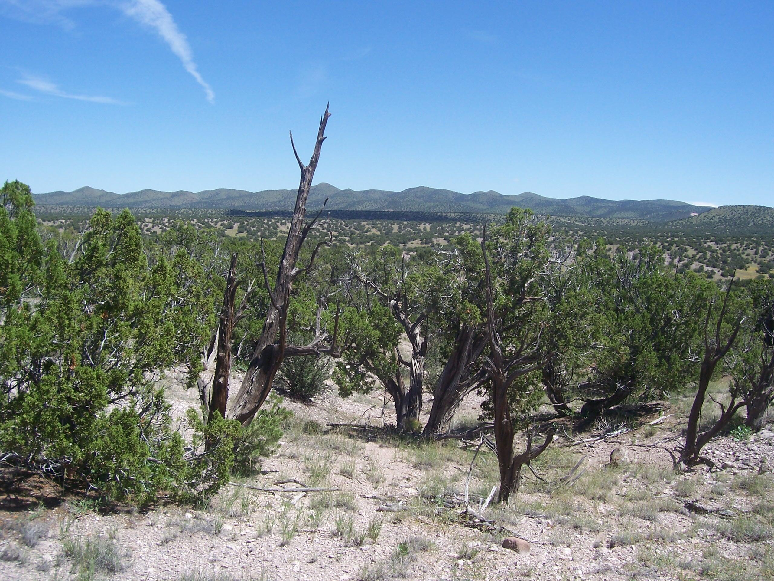 52 Camino Del Sueno Property Photo