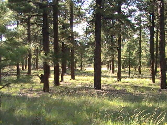 Lot 42 Cibola Trails Property Photo 4