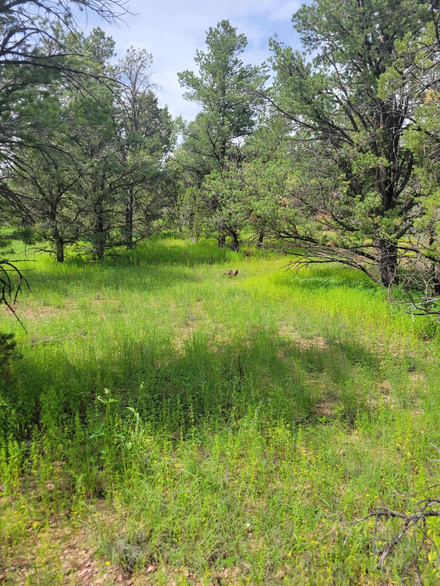 114 Homestead Trail Property Photo