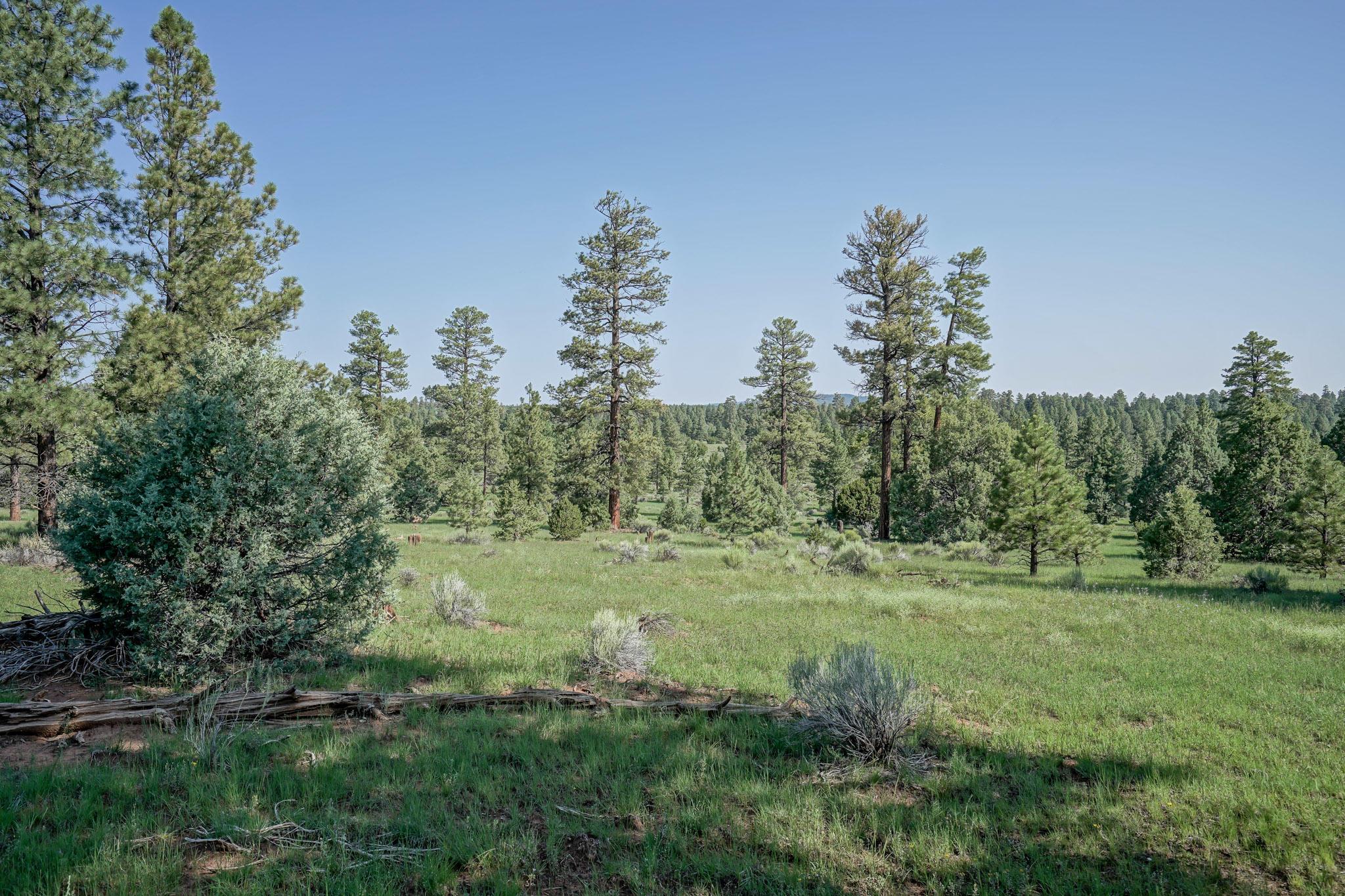 27 Cabin Ridge Road Property Photo 58