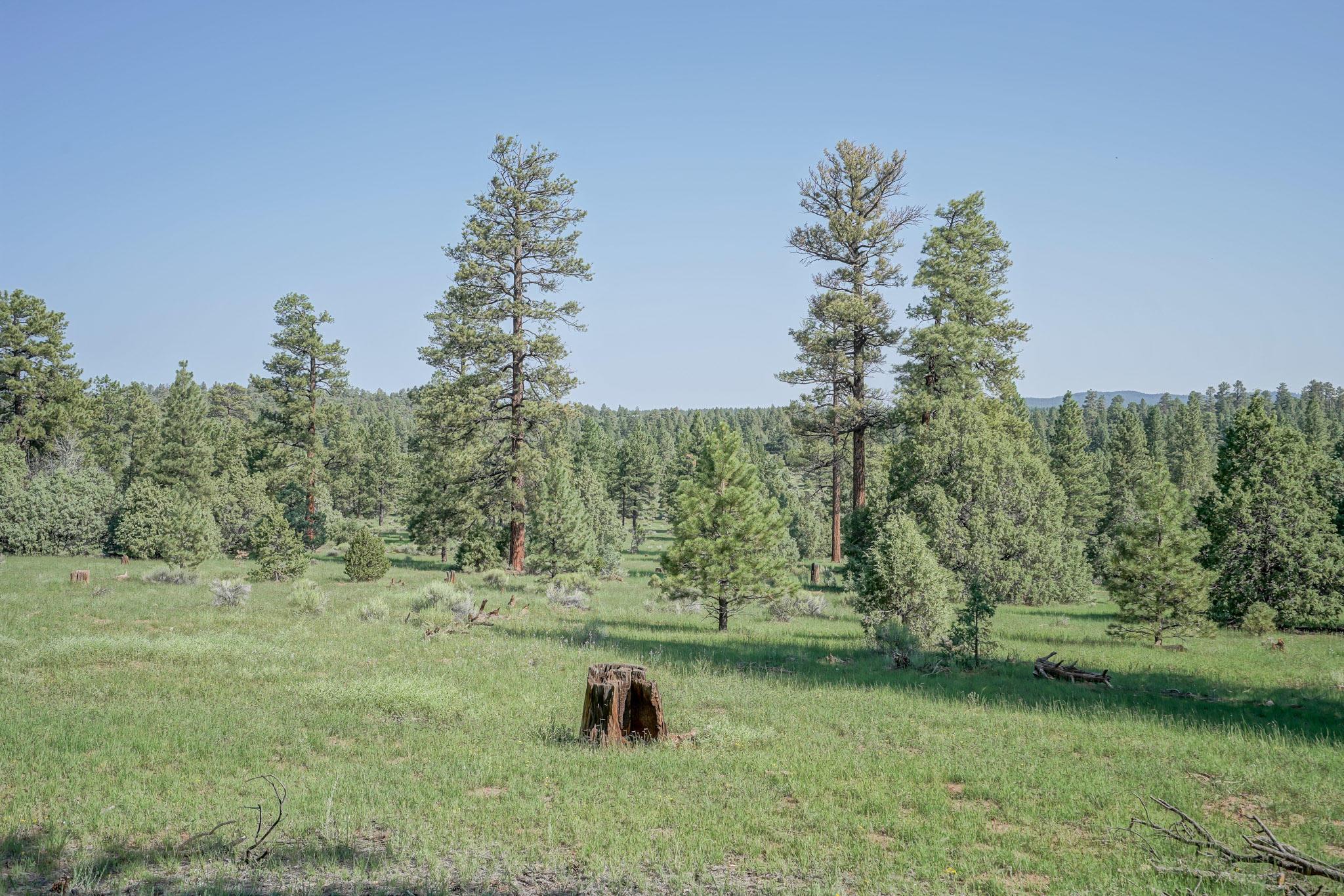 27 Cabin Ridge Road Property Photo 59