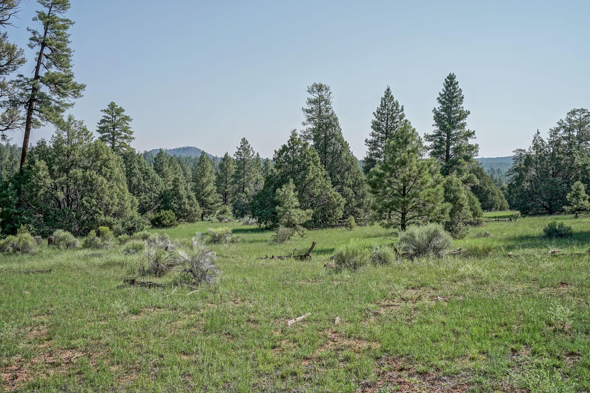 27 Cabin Ridge Road Property Photo 62