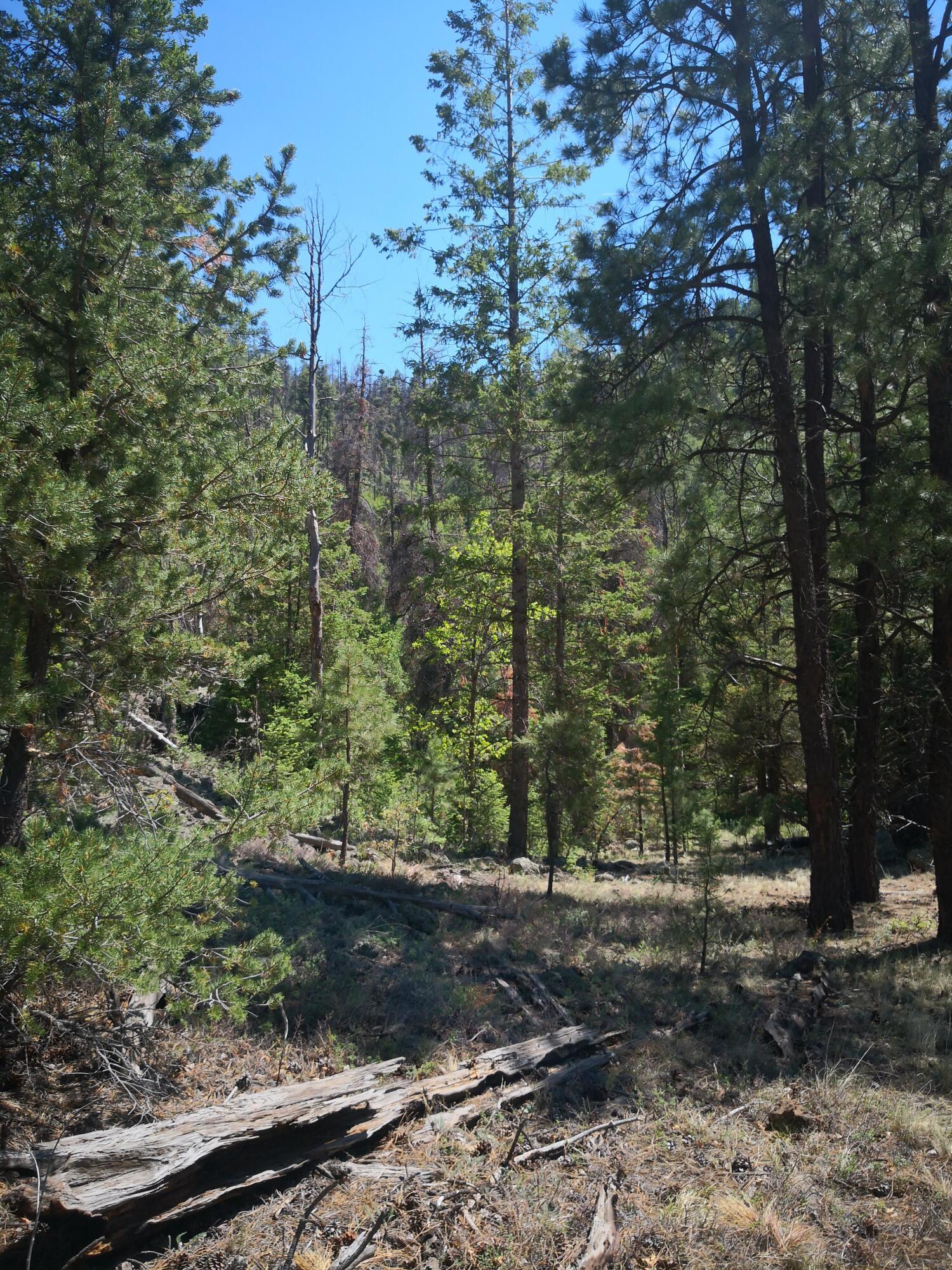 0 Little Bear Road Property Photo