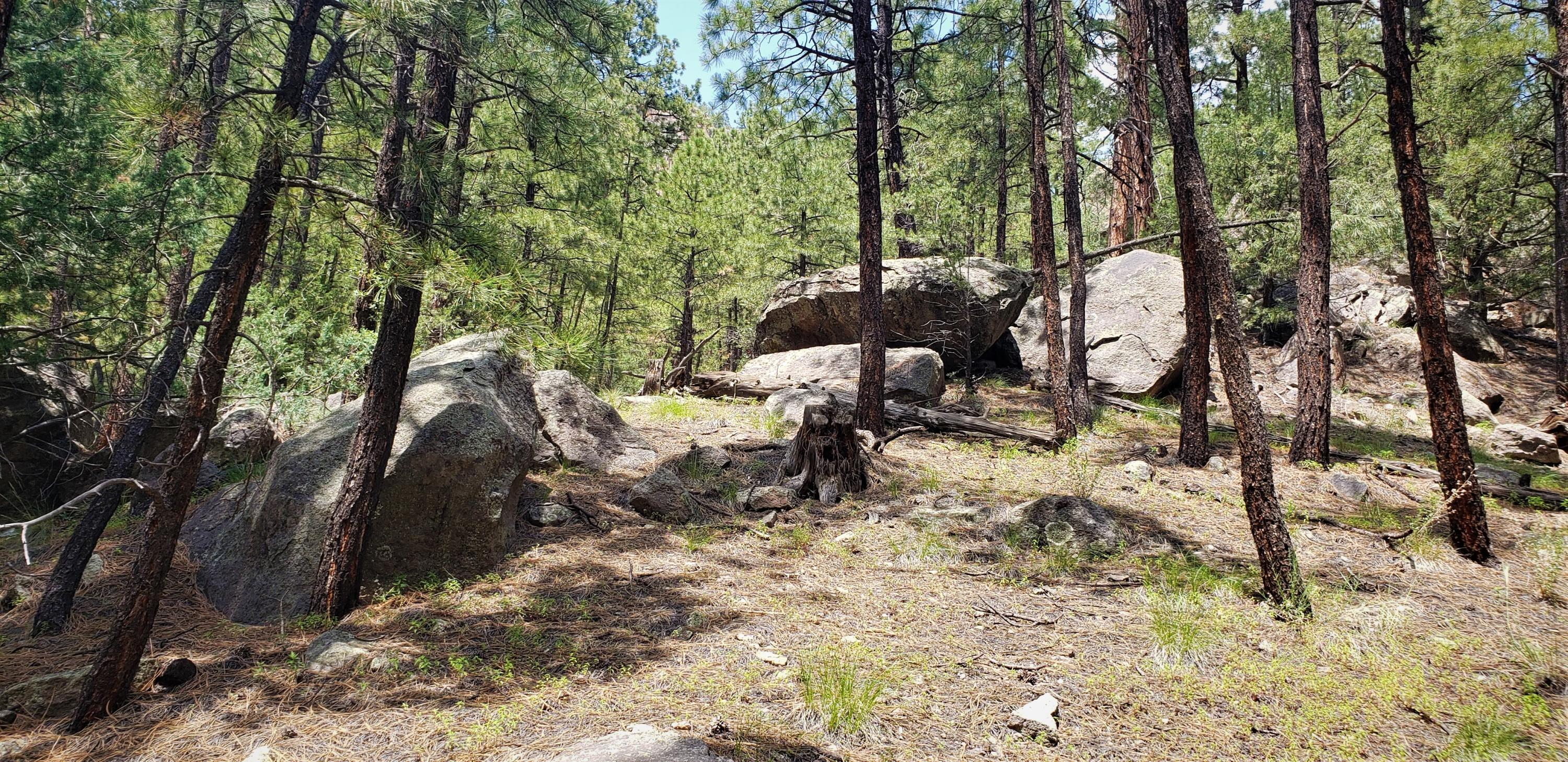 Cool Pines Lot 39,40, 41 Property Photo 1