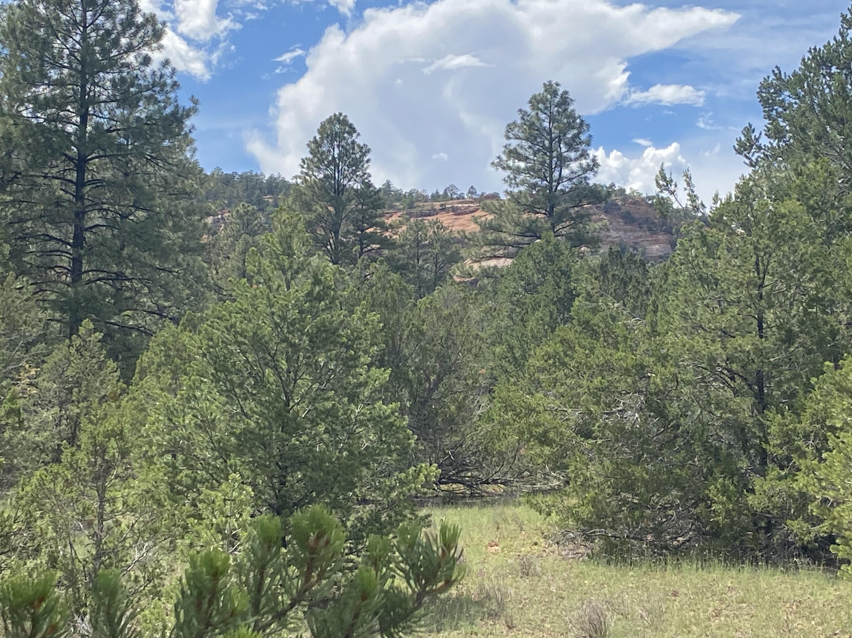 Lot 13 Yucca Drive Property Photo