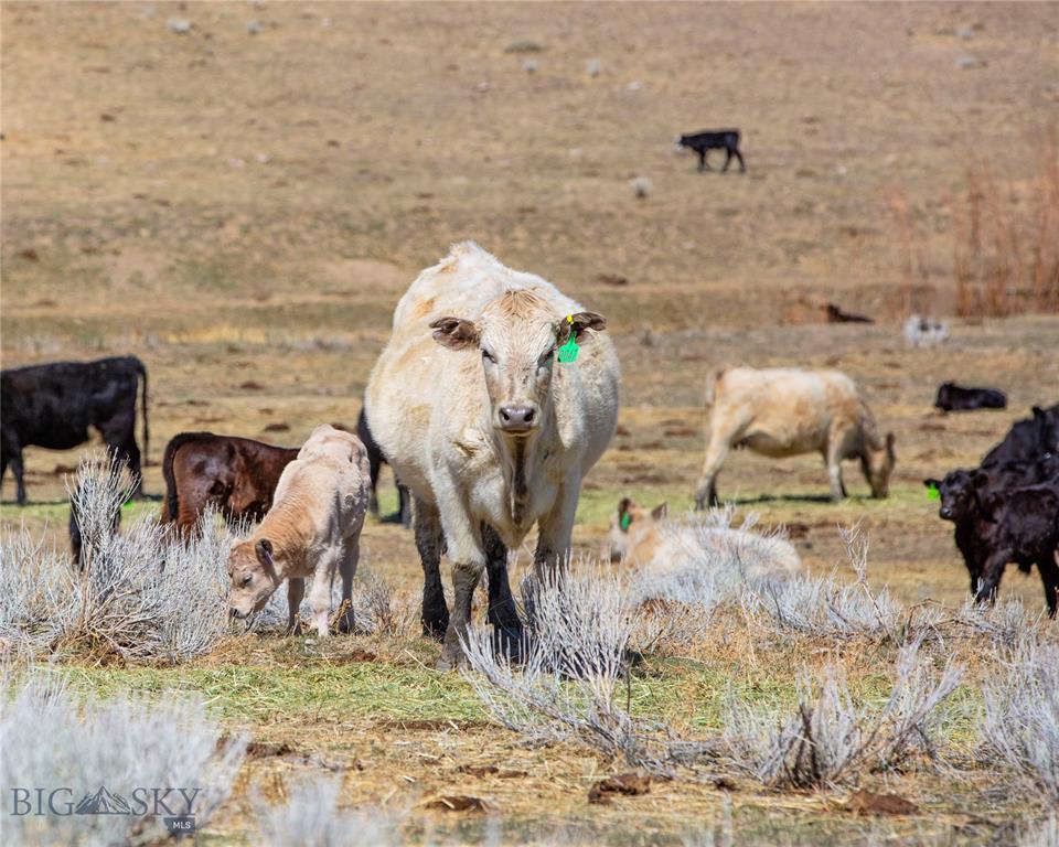 479 Milligan Canyon Road Property Photo 31