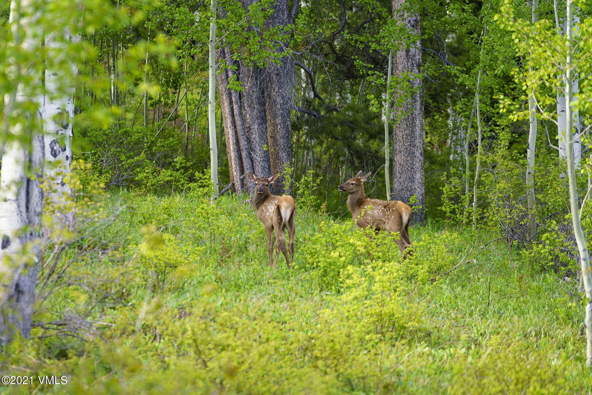 2400 Casteel Creek Property Photo 180